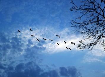 OTOP zachęca do pomagania ptakom