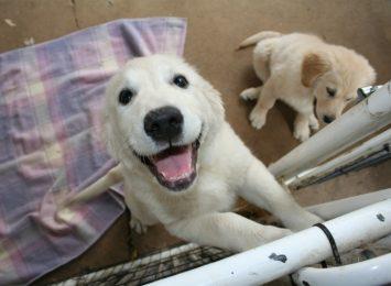 Tegoroczny program bezpłatnej sterylizacji psów i kotów odbędzie się z opóźnieniem