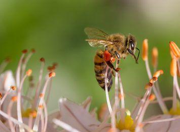 W Częstochowie powstanie miejska pasieka pszczół