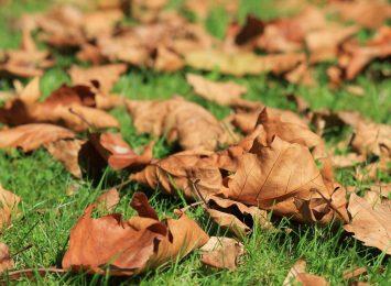 Jesień to czas porządków na posesjach, w ogrodach i na działkach. CUK bezpłatnie odbierze zielone odpady