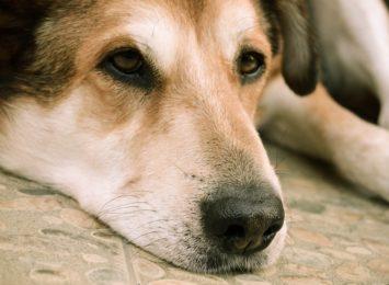 Już można się zgłaszać ze zwierzakami w programie darmowej sterylizacji. Akcja ruszyła dzięki B.O.