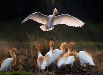 Jesienna to dobra pora na rozpoczęcie dokarmiania ptaków