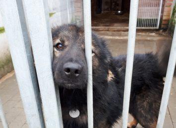 Pomóż zwierzakom w potrzebie, bo warto!