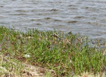 Bardzo sucho w województwie. Sytuację mogą poprawić tylko długotrwałe opady deszczu