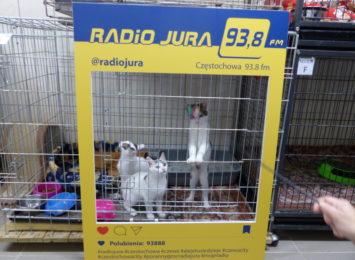 Pomóż kociakom ze schroniska! Specjalna akcja na Placu Biegańskiego