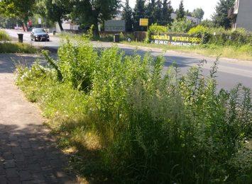 Bujnie rosnąca trawa prosi się o przycięcie, a jednak nie jest regularnie koszona