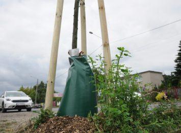 Susza zagraża miejskiej zieleni