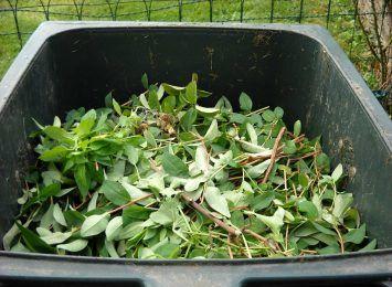 CUK odbiera liście i gałęzie z prywatnych posesji!