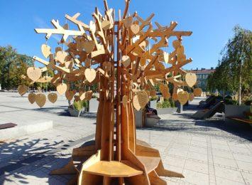 Drzewko klimatyczne, które latem ozdobiło Plac Biegańskiego zostanie u nas jeszcze kilka dni