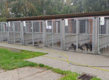 Miasto realizuje program opieki nad bezdomnymi zwierzętami