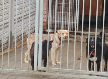 Schroniska dla zwierząt czekają na pomoc