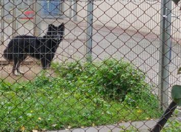 Zakłady karne wsparły schronisko dla zwierząt