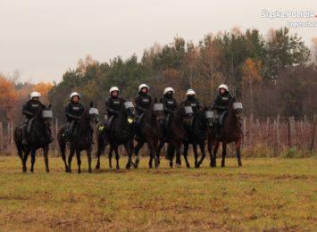 Częstochowska policja przeprowadziła certyfikację koni przeznaczonych do służby w policji