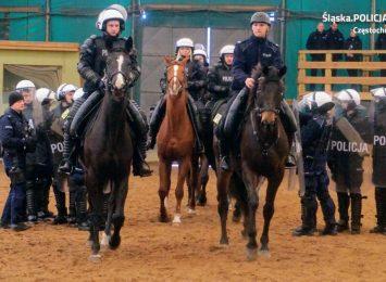 Mamy w częstochowskim garnizonie 4 nowe konie służbowe, które zostały wcielone do policyjnej służby