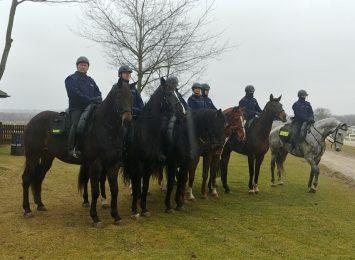 Policja konna z Częstochowy i Chorzowa tworzy już jedną, wspólną jednostkę