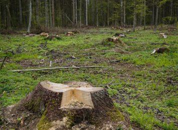 W Lisowicach koło Lublińca do wycinki przeznaczono 120 przydrożnych drzew