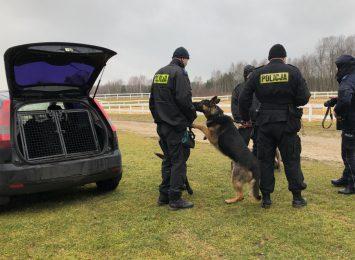 Częstochowskie psy patrolowo-tropiące cały czas w akcji