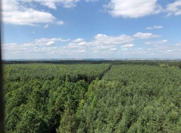 Zakaz wstępu do lasów! Od dziś (3.04.)!
