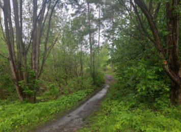 Ponad 600 worków śmieci udało się wywieźć z lasu komunalnego w Blachowni