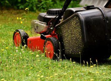 A trawa rośnie i rośnie...