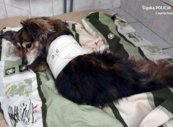 Miesiąc spędzi w areszcie mężczyzna, który przed kilkoma dniami skatował psa