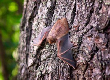 Przetarg na przeprowadzenie inwentaryzacji miejsc występowania nietoperzy i ptaków