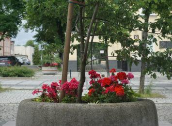Nowe nasadzenia w naszym mieście. Kwiaty już cieszą oczy przechodniów