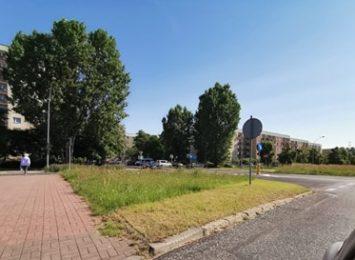 Wysoka trawa porasta Częstochowę. Miejscami utrudnia widoczność i stwarza zagrożenie
