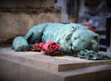 Czy w Częstochowie powstanie cmentarz dla zwierząt?