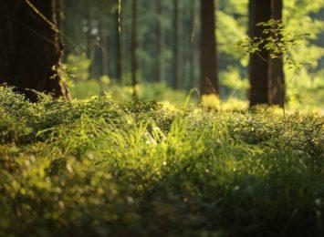 Lasy państwowe wprowadziły pilotażowy program biwakowania na ich terenie