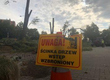 Ekolodzy protestują w miejscu niedawnej wycinki szpaleru drzew w al. Niepodległości