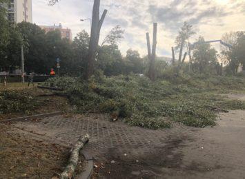 Wycinka drzew w alei Niepodległości i komentarz Gminy Olsztyn