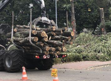 Wycinka drzew w alei Niepodległości. Mamy oświadczenie Urzędu Marszałkowskiego w tej sprawie