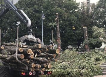 Wycinka drzew w dzielnicy Północ