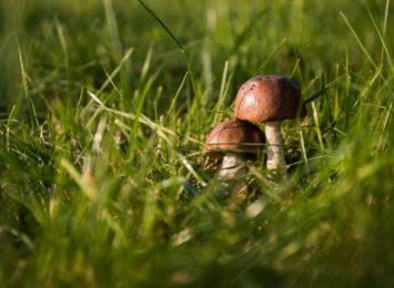 Kleszcze i żmije w lasach - uważajcie na grzybach!