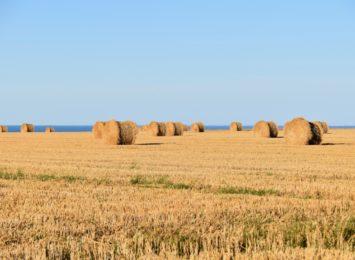 Rozpoczął się Powszechny Spis Rolny