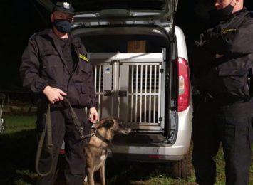 Poszukiwany grzybiarz odnaleziony przez psa tropiącego