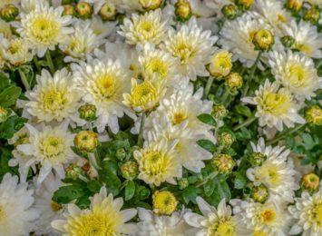 Mimo zamkniętych cmentarzy, kupowaliśmy kwiaty od handlowców