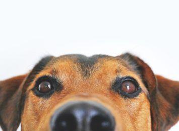 Jesteś na kwarantannie i nie masz co zrobić z psem?