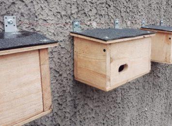 Na elewacjach trzech podstawówek na Północy pojawiły się budki dla jerzyków