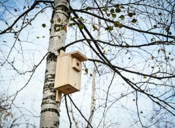 W Częstochowie powieszono lęgowe budki dla ptaków