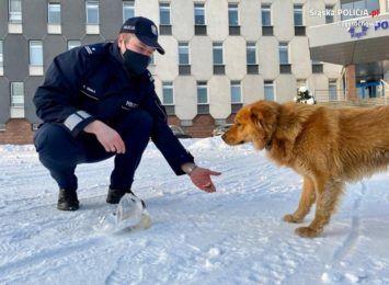 Policjanci uratowali zbłąkanego psa