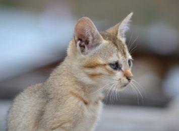 Nowy program opieki nad zwierzętami przyjęty przez radnych. Miasto wyda na ten cel 1,5 mln złotych