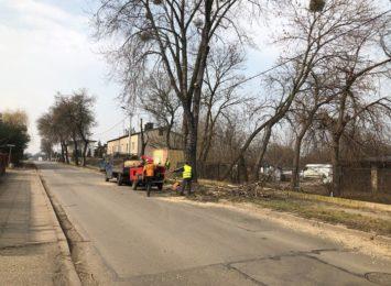 Wycinka drzew została wstrzymana przy ul. Piastowskiej. Interweniowali mieszkańcy i rada dzielnicy