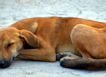 Schronisko dla zwierząt w Jamrozowiźnie pod Częstochową zagrożone likwidacją, alarmują w tej sprawie miłośnicy zwierząt