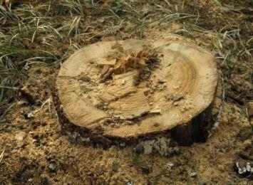 Zniknęło kilkaset drzew, będzie osiedle czy gospodarstwo rolne? Co dalej z inwestycją przy Wiolinowej na Grabówce?