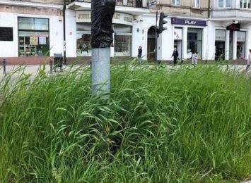 """""""Trawa po kolana"""" - piszą do nas mocno rozgoryczeni mieszkańcy. Jakie są w tym roku miejskie plany dotyczące koszenia?"""