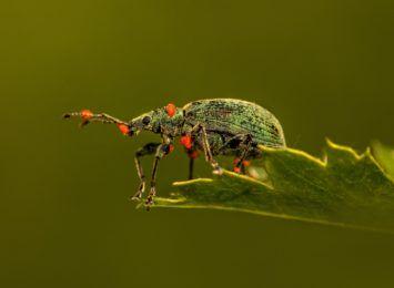Egzotyczne owady, najpiękniejsze motyle świata - nowa wystawa w Muzeum