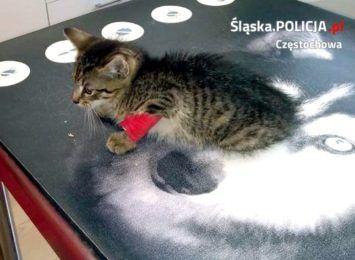 Psy policyjne z Częstochowy pomogły przy akcji ratowania kociaka