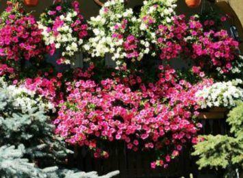 Twój balkon wyróżnia się na tle innych? Możesz pochwalić się bujną, kolorową roślinnością? Zgłoś się do konkursu